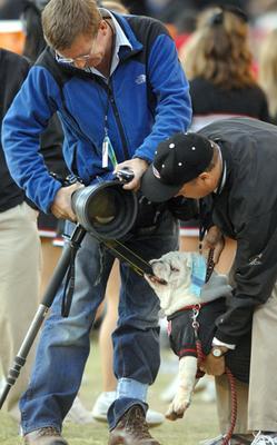 Uga VI goes after cameraman vs. Auburn