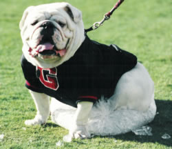 Uga in black